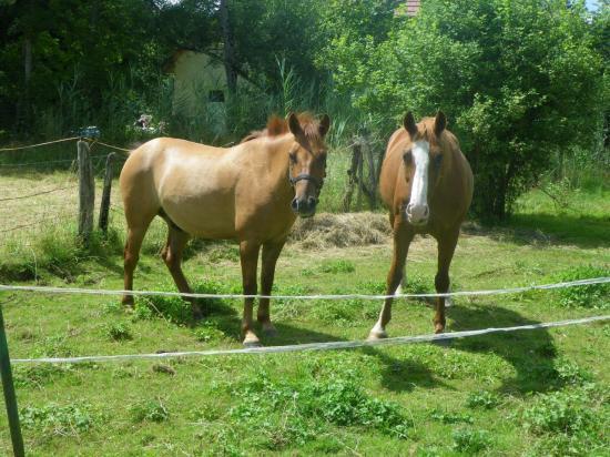 formation-etho-equine-22-07-8.jpg